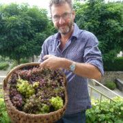 Weintrauben und Trevor