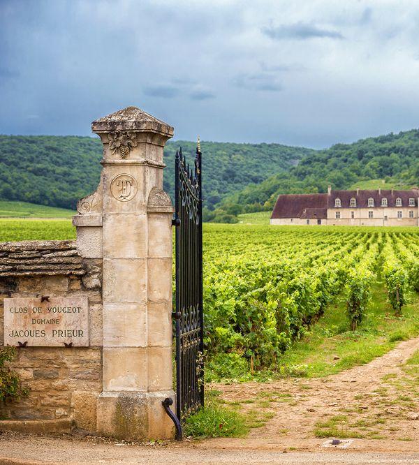 Burgund-Top Weinberg