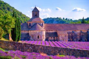 Provence-Lavendelblüte