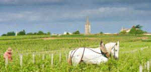 Aktives Reisen-Pferd im Weinberg