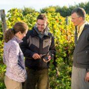 Weinwanderungen-Im Weinberg mit dem Winzer