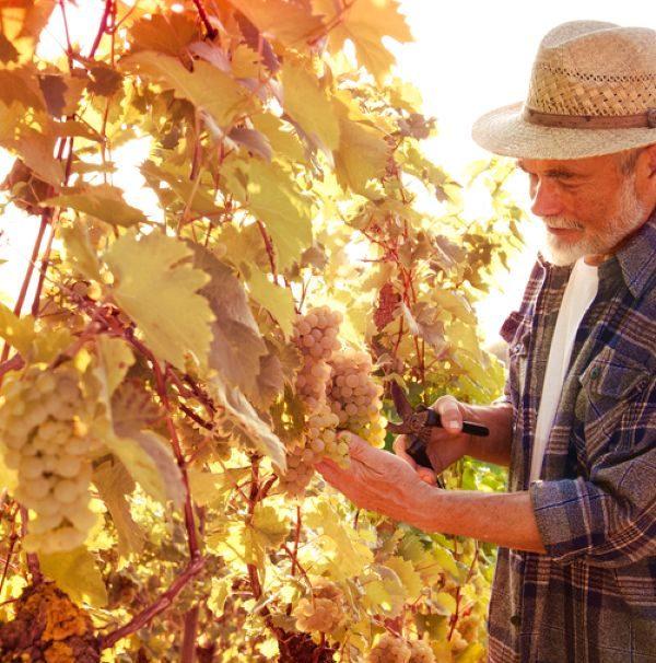 Weinreisen-Winzer im Weinberg