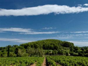 Ausblick vom Weingut Ihrer Provence mit Kindern Reise