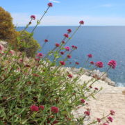 Côte d'Azur Urlaub_Paul Ricard Insel